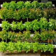 Advantages of Growing Your Own Food
