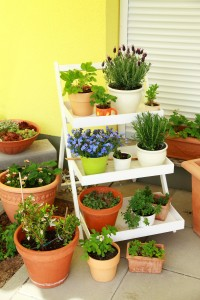 Indoor Plants-Essential Oils and Hygiene