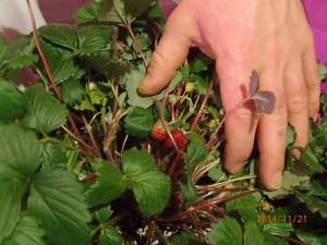 Slider-Strawberries