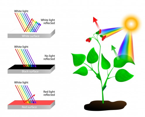 Photoreceptors and Spectral Absorption