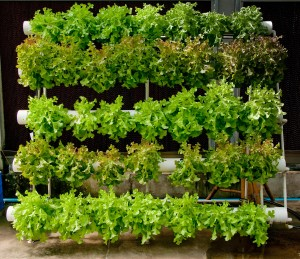 Advantages of Growing Your Own Food-Hydroponic Vertical Garden