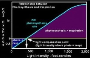 Relationship between Photosynthesis and Respiration