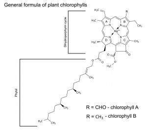 Formula of Plant Chlorophylls