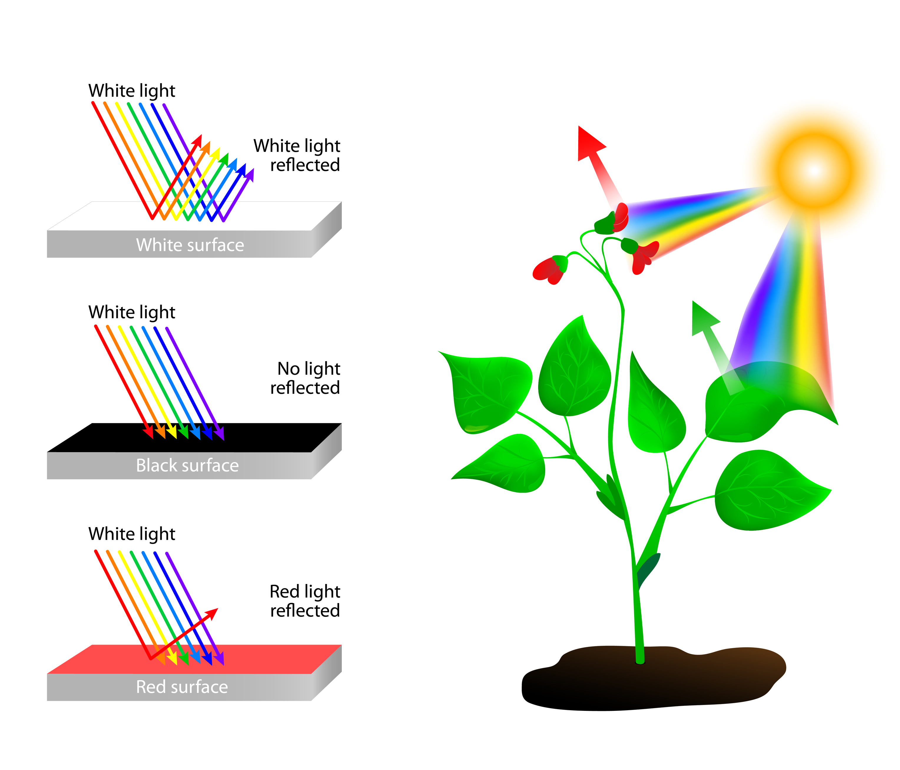 Photoreceptors and spectral absorption just led us