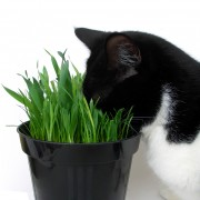 Organic Trends For Our Furry Friends