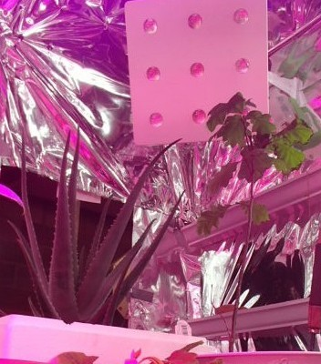 Safely Hanging My Grow Light